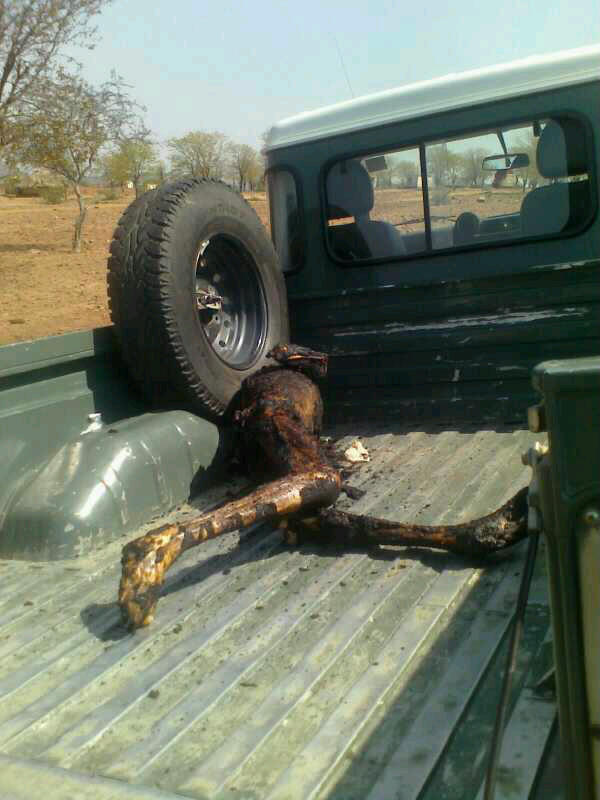 chisumbanje-ethanol-disaster-in-pictures-1