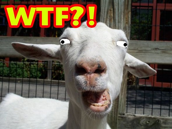 Goat rapist caught after 'sounds of distress'