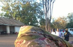 An injured MDC-T youth after attack by Zanu PF thugs in Chegutu