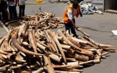 Ivory smuggling is rampant in Africa