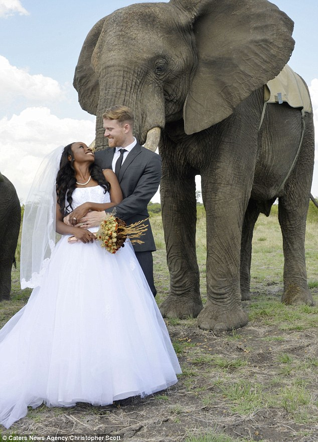 Photos Of A Couple S Zimbabwe Wedding Alongside Elephants