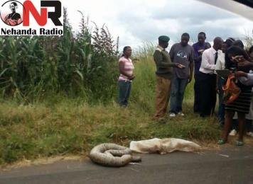 Dead python dumped near Borrowdale Race Course (Pictures)