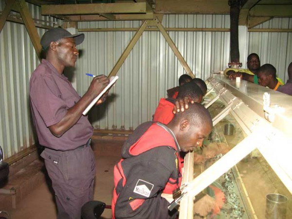 Diamond sorting in Zimbabwe