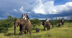 Elephant safaris in Zimbabwe
