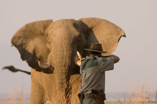 Illegal allocation of hunting licenses linked to US ban on tusks