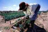 Kotwa women market gardeners bemoan lack of collateral