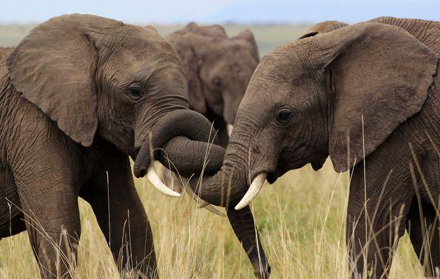 Elephants ruin Zimra boss' bush sex tryst