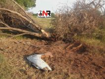 This is the accident spot were eleven Zimbabweans were killed and seven others escaped with severe injuries after a South Africa-bound minibus hit a donkey and then rammed into a tree in Botswana