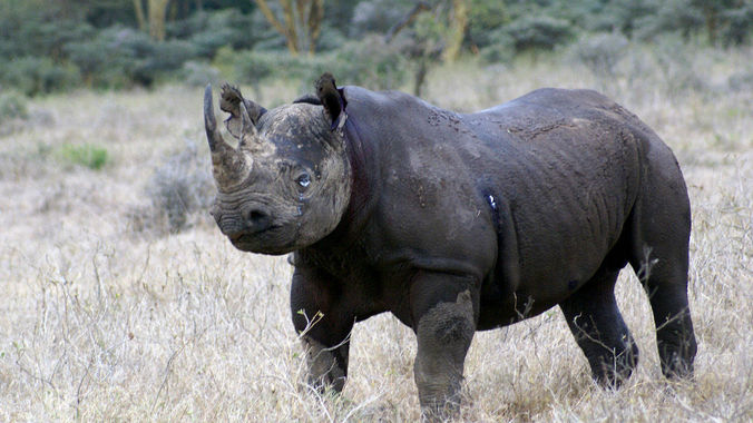 Poachers targeting rhino calves in Zimbabwe