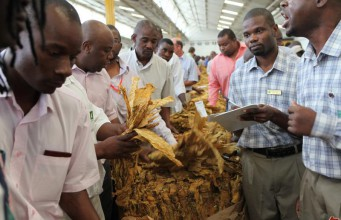 Zimbabwe tobacco industry at a crossroads