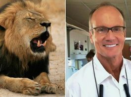 Walter Palmer has faced a huge backlash online over his killing of Cecil the lion