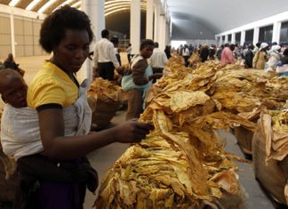 Tobacco farmers earn $565m