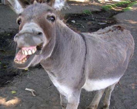 The donkey is my girlfriend, man tells court