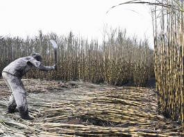 Tongaat allays sugar shortages fear