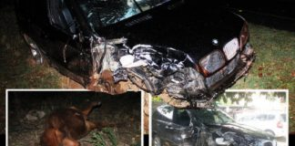 The wreckage of The Chronicle Editor, Mduduzi Mathuthu's BMW X5 and the cow he hit before side-swiping with a Mitsubishi Colt truck along Plumtree Road on Sunday night.