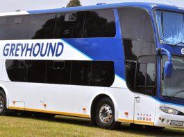 Greyhound buses