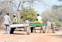 Suspected smugglers make their way from Dumba Village in Beitbridge to the Limpopo River on donkey-drawn carts to collect goods smuggled from South Africa. The bad state of the roads makes them inaccessible to cars. (Picture by Obey Sibanda)