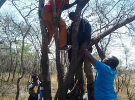 Police officers untie the body of Constable Marapira from the tree on which he allegedly hanged himself and the text message he sent to his girlfriend before the suicide