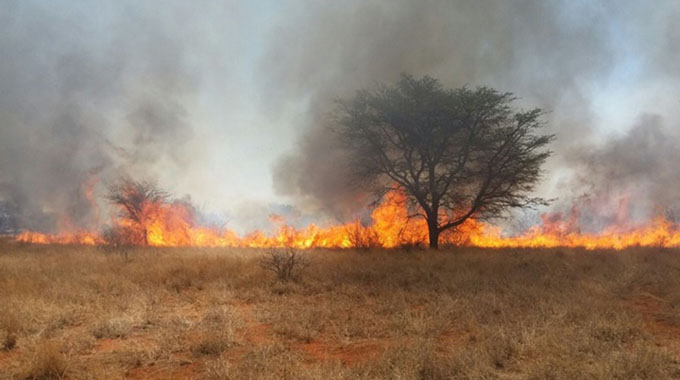 Chiredzi Man Fined Two Goats For Burning 20ha Forest